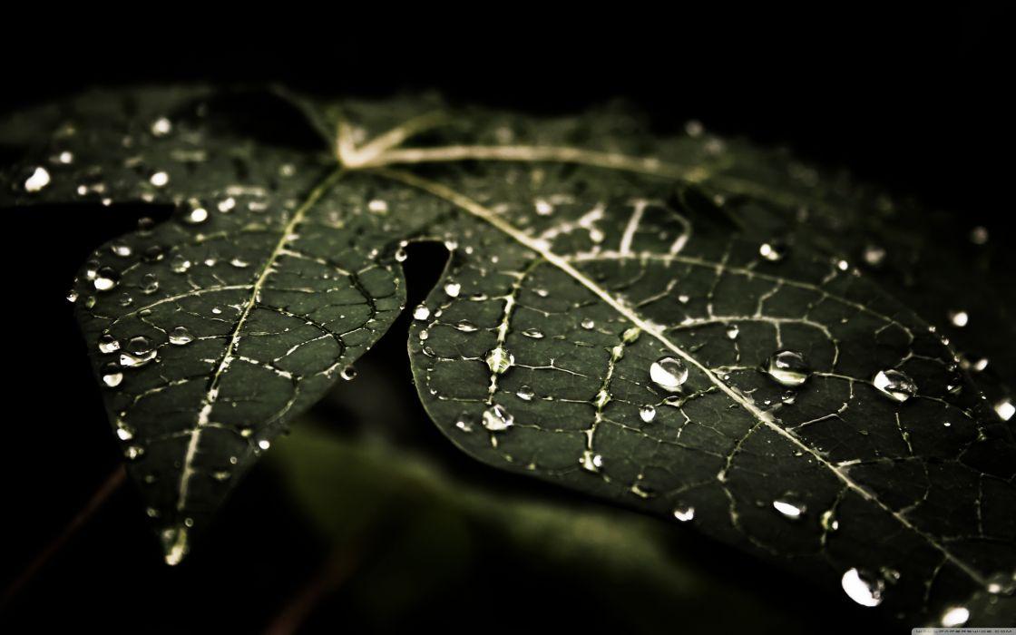 leafy droplets-wallpaper-3840x2400 wallpaper
