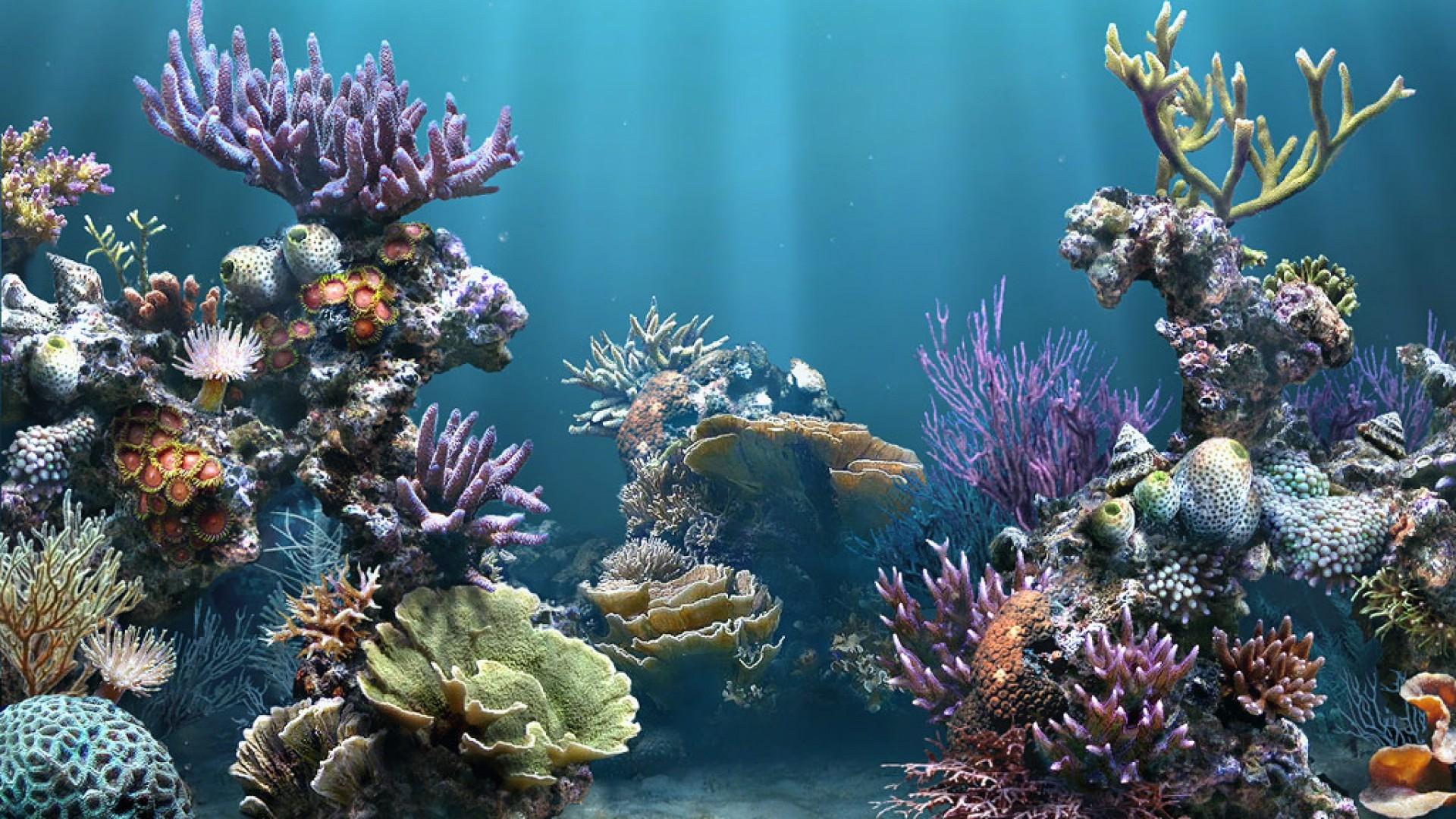 Coral reef wallpaper | 1920x1080 | 232408 | WallpaperUP