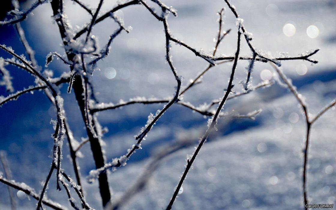 winter depth of field TV shows wallpaper