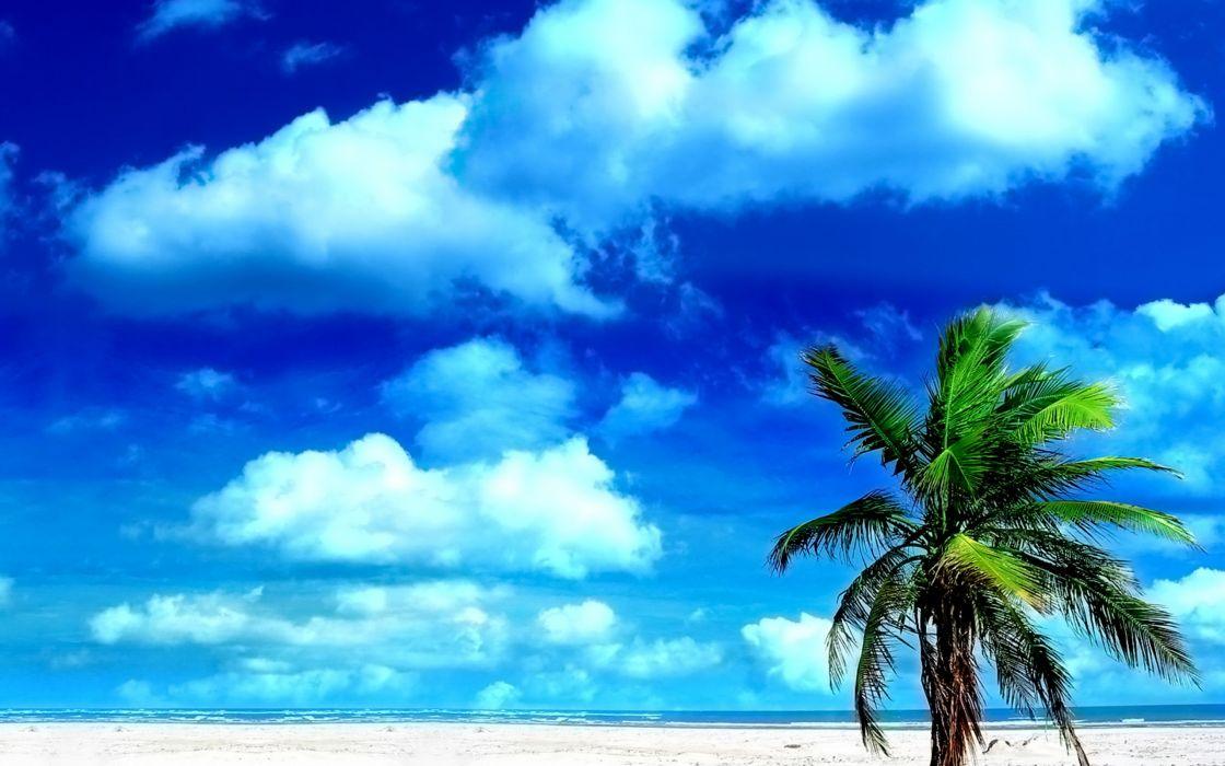 palm skies beaches wallpaper