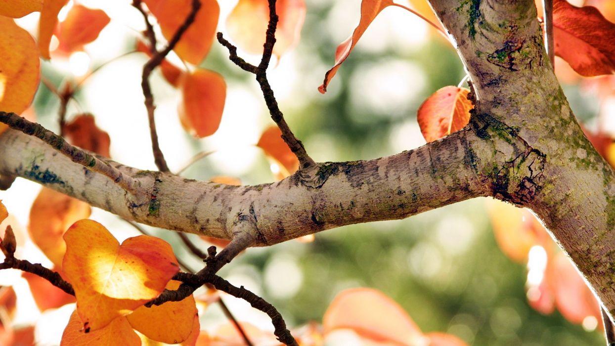 trees autumn bokeh wallpaper