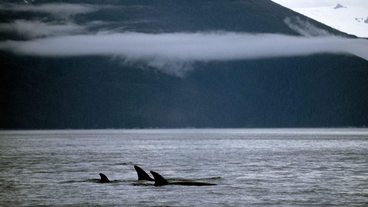 family fish whales killer whales lakes wallpaper