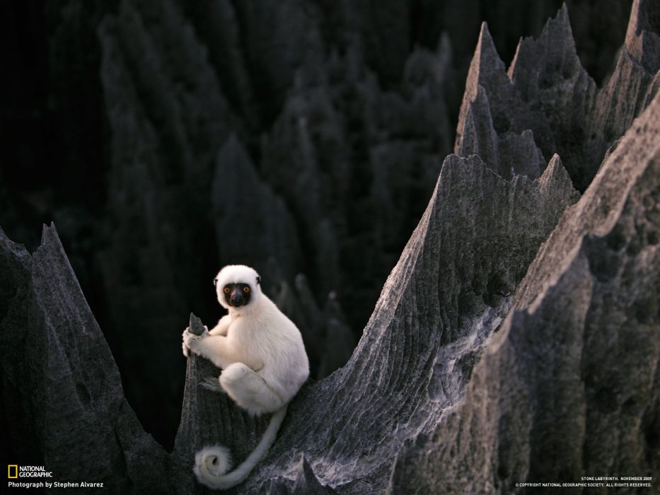 landscapes nature animals National Geographic national wallpaper
