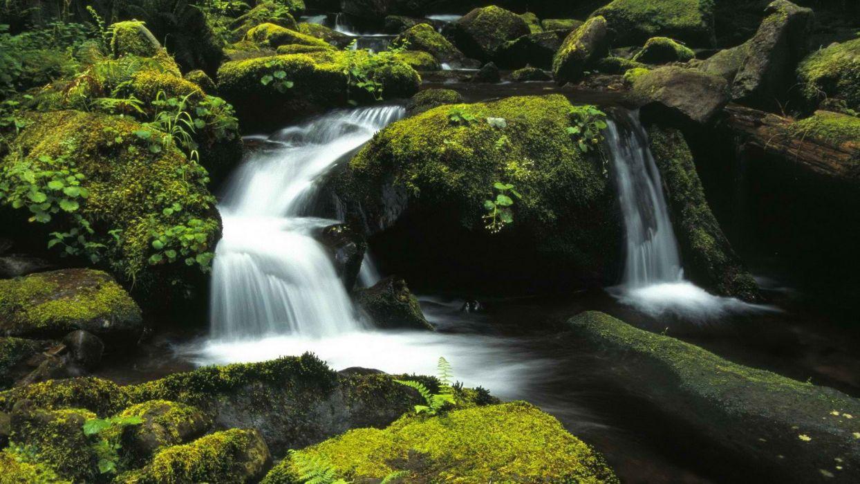 forests national Oregon wallpaper