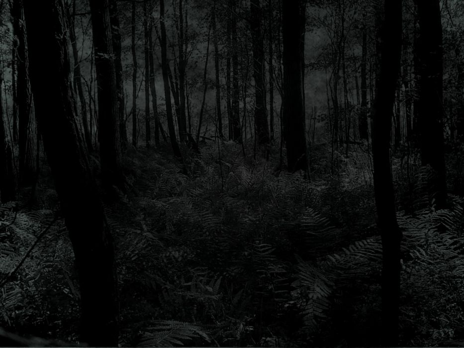 creepy trees dark forests woods wallpaper