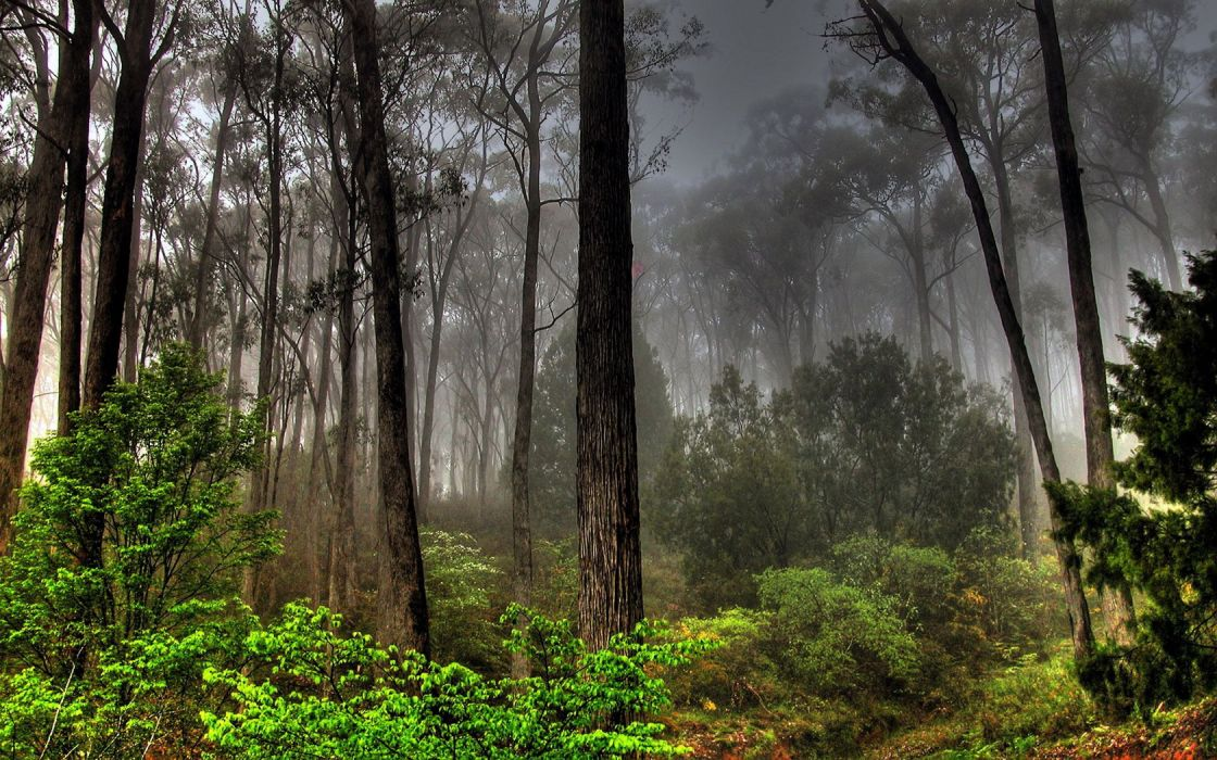 nature trees forests smoke wallpaper