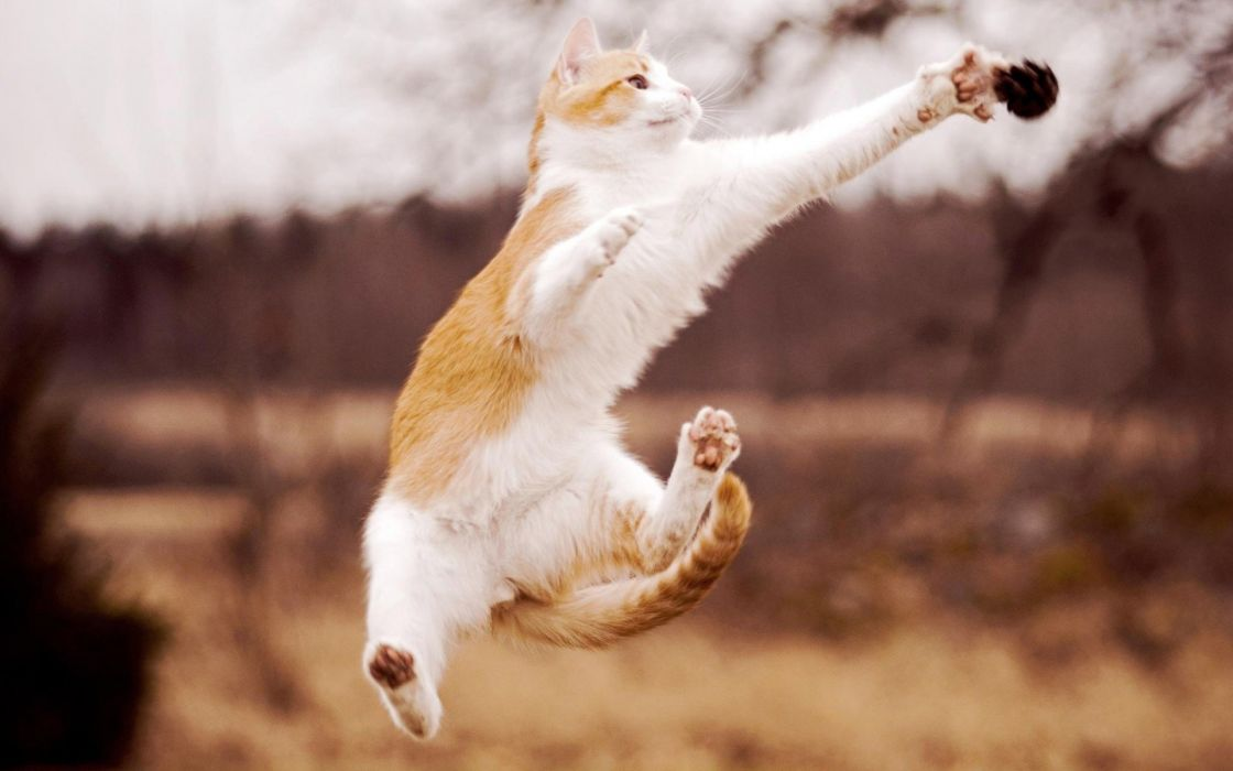 cats animals jumping blurred background wallpaper