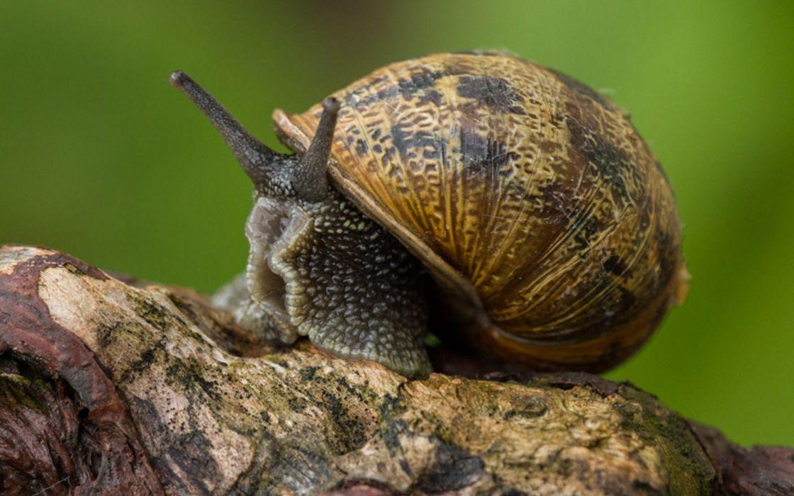 nature snails mollusks wallpaper