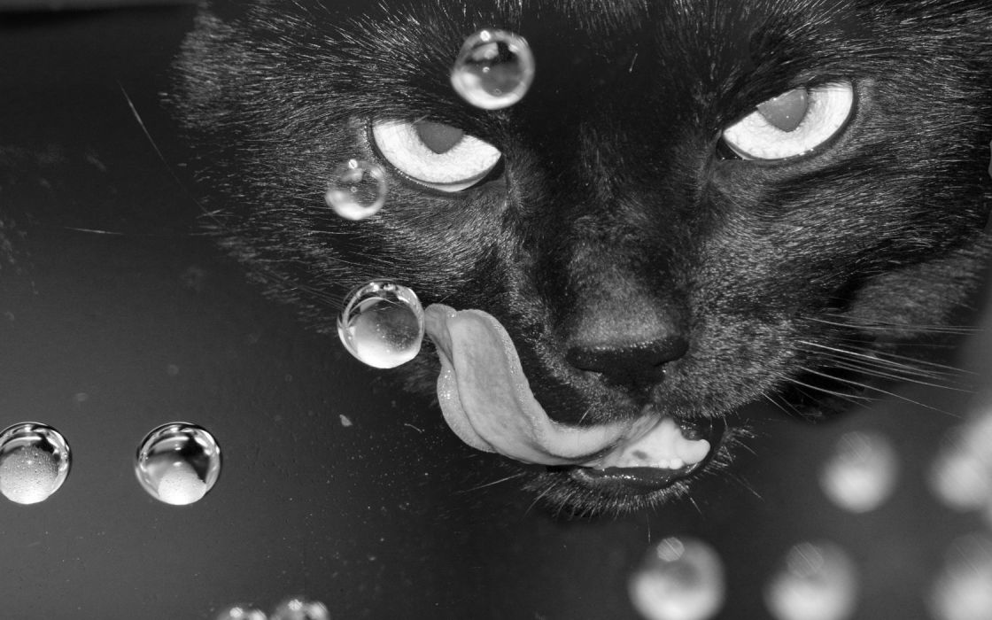 water close-up cats animals tongue monochrome wallpaper