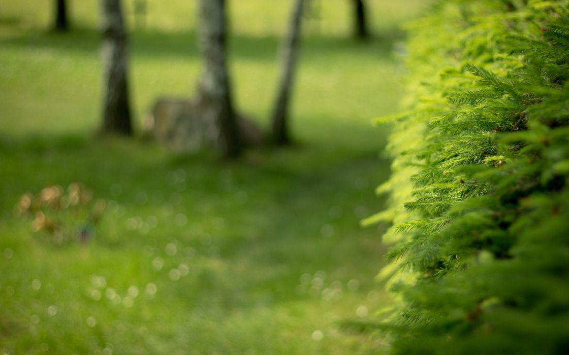 green nature trees depth of field wallpaper