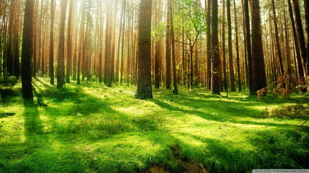 green nature trees forests grass wallpaper