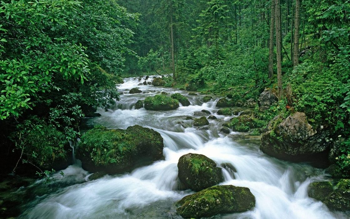 trees forests rivers wallpaper