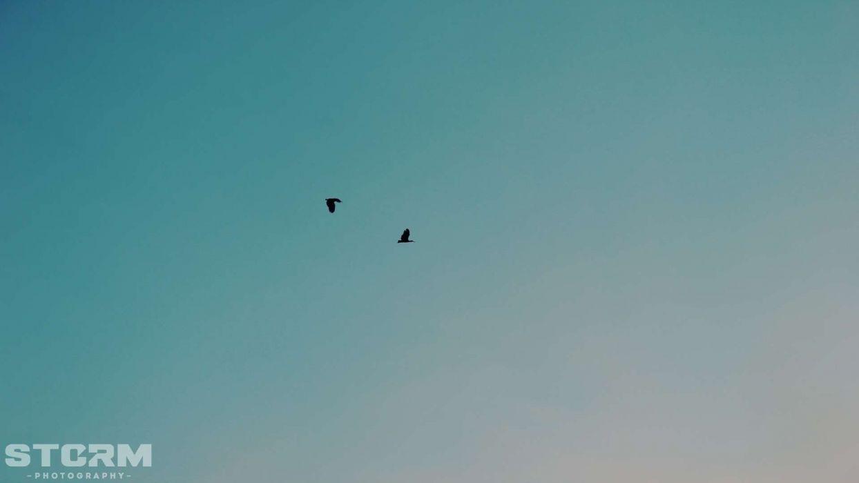 blue love birds peace sillhouette skies wallpaper