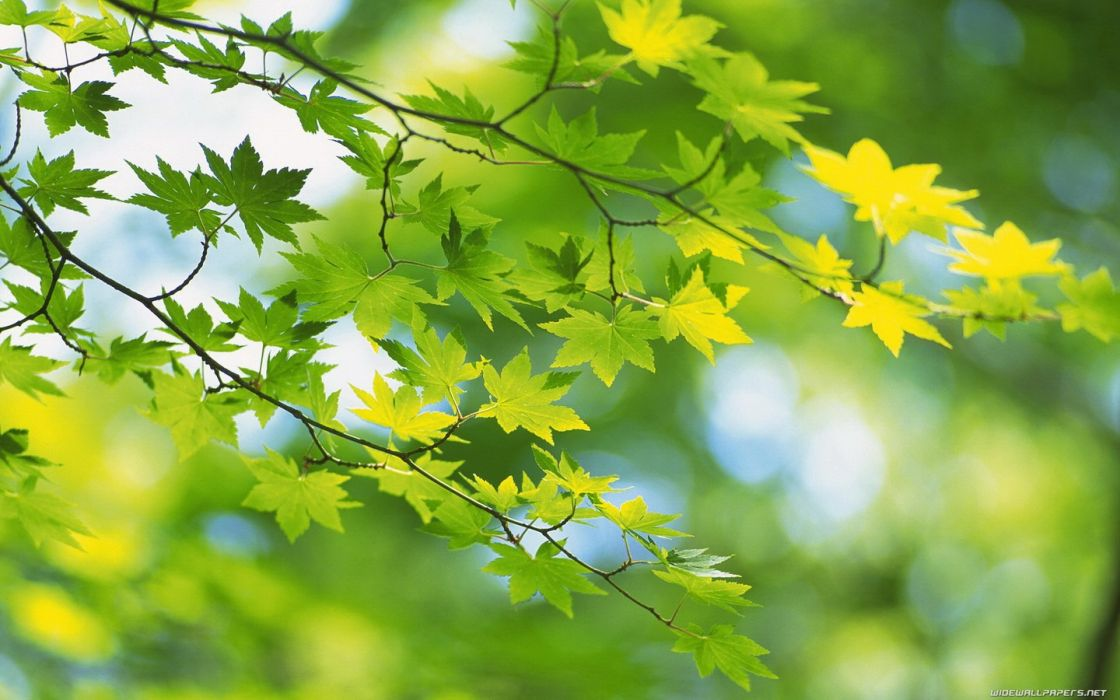 close-up nature trees leaves wallpaper