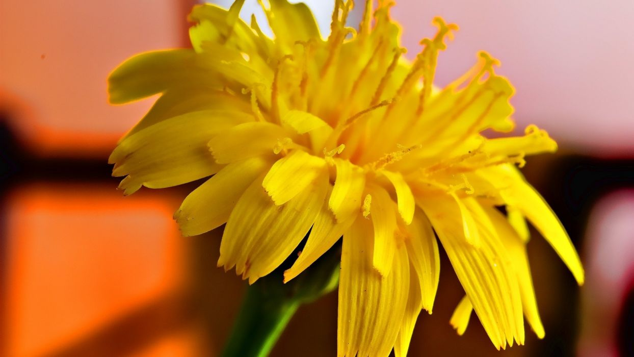 abstract nature flowers yellow flowers wallpaper
