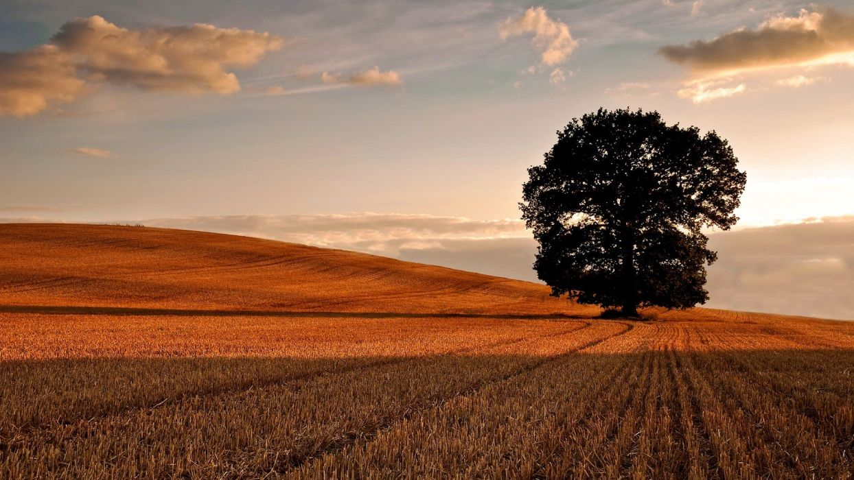 sunset clouds trees fields hills skyscapes wallpaper