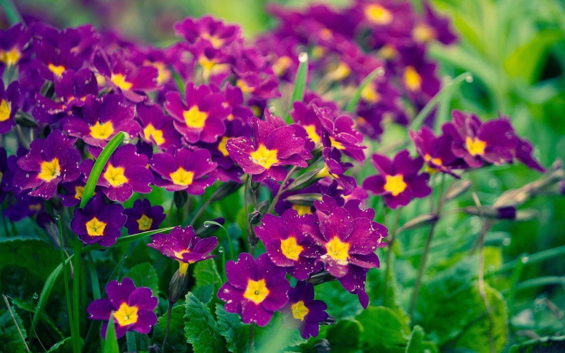nature flowers wallpaper