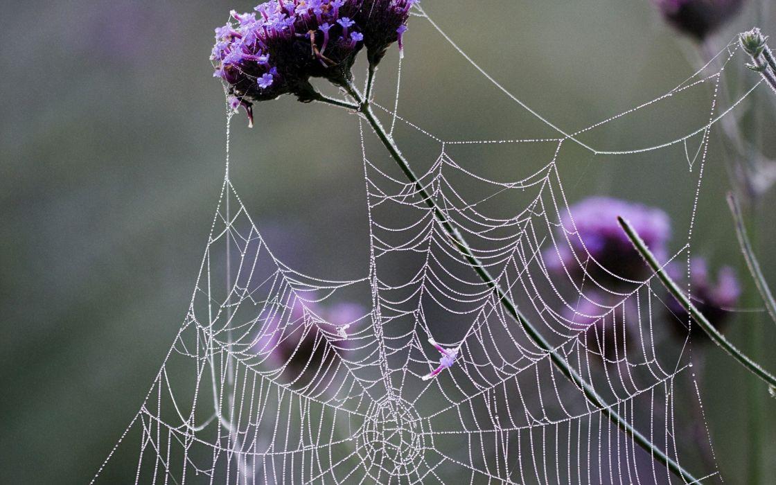 creepy spider webs wallpaper