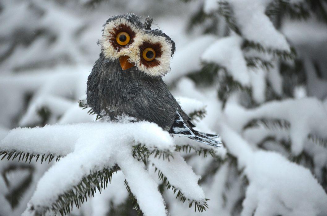 owl white winter spruce wallpaper