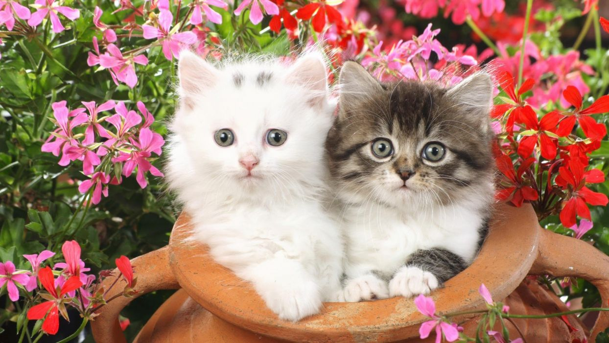 flowers cats animals kittens wallpaper