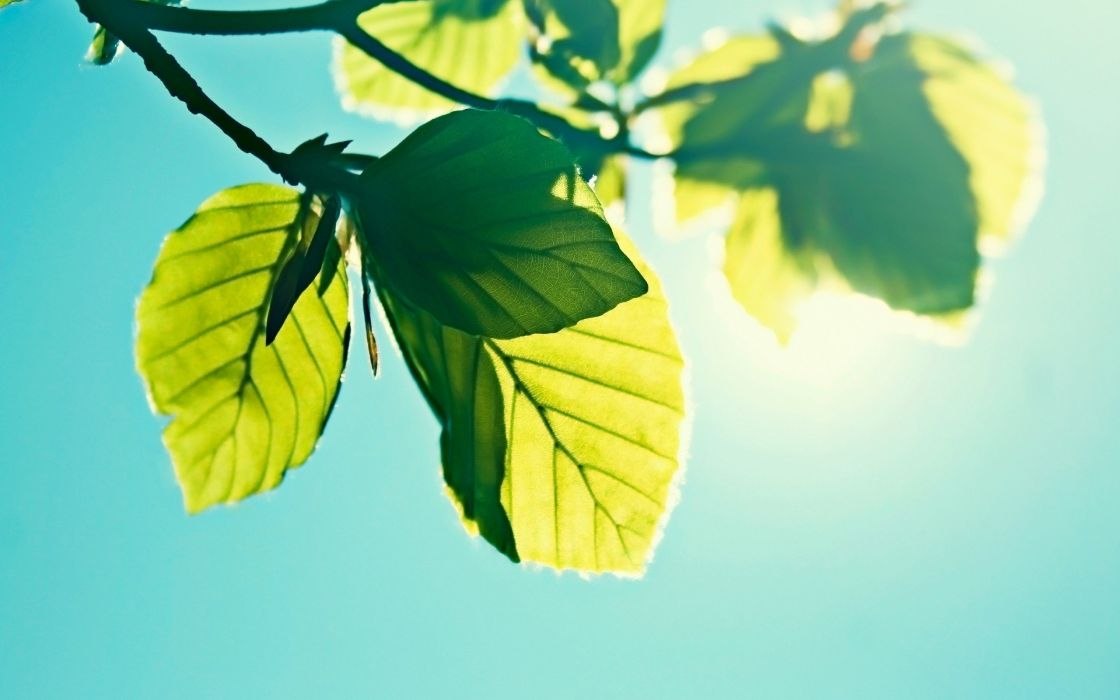nature leaves sunlight skyscapes wallpaper