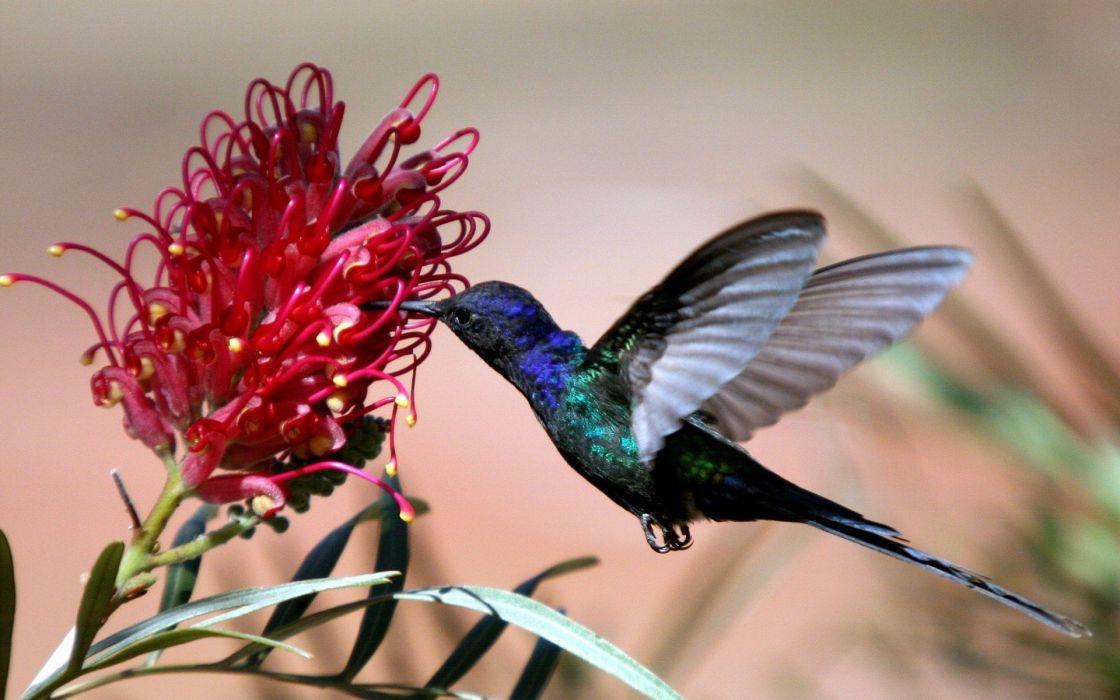 wings birds hummingbirds flight iridescence wallpaper
