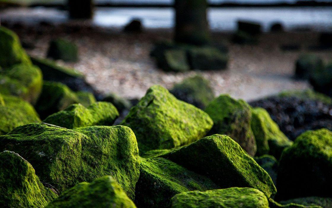 rocks algae wallpaper