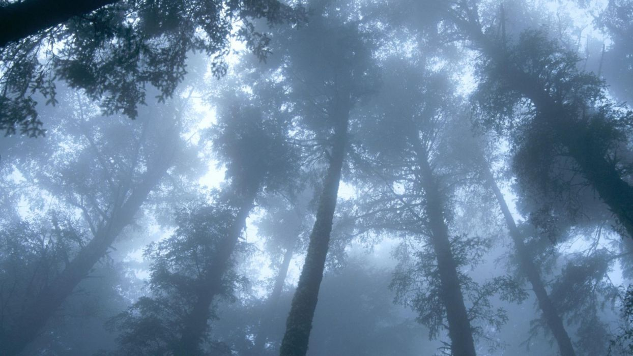 trees forests wallpaper