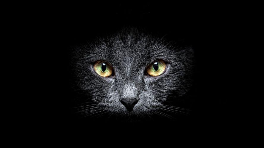 black dark cats animals wallpaper