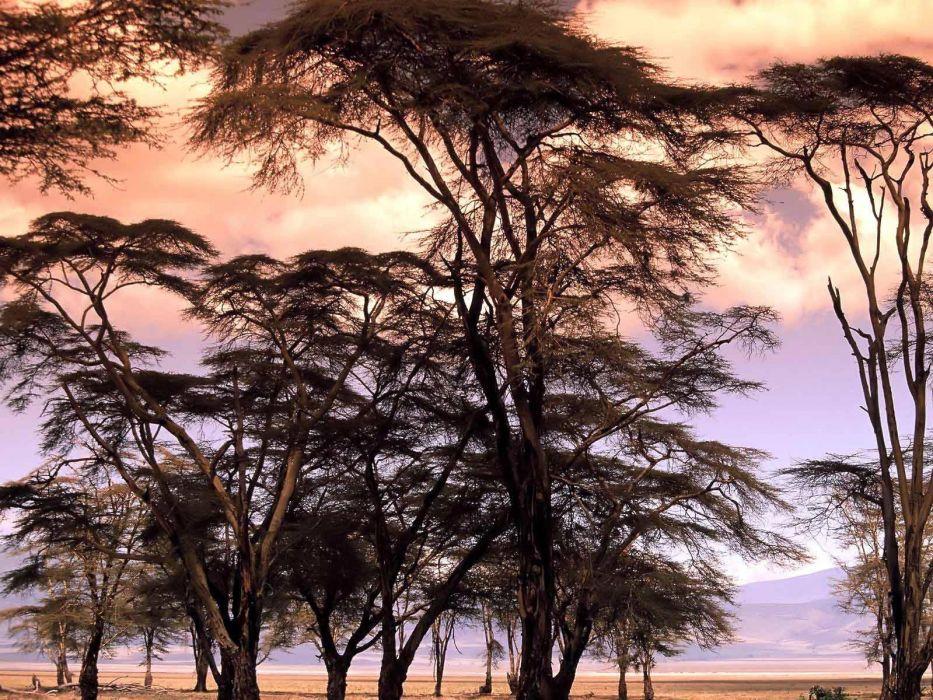 landscapes nature trees skylines wallpaper