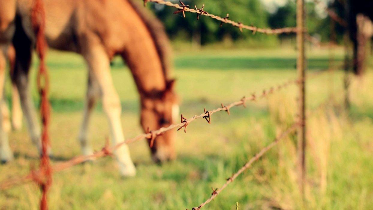 animals horses Animal Kingdom wallpaper