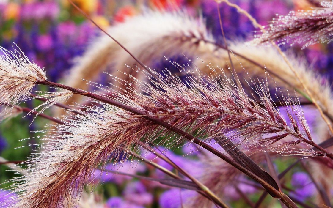abstract spikelets wallpaper