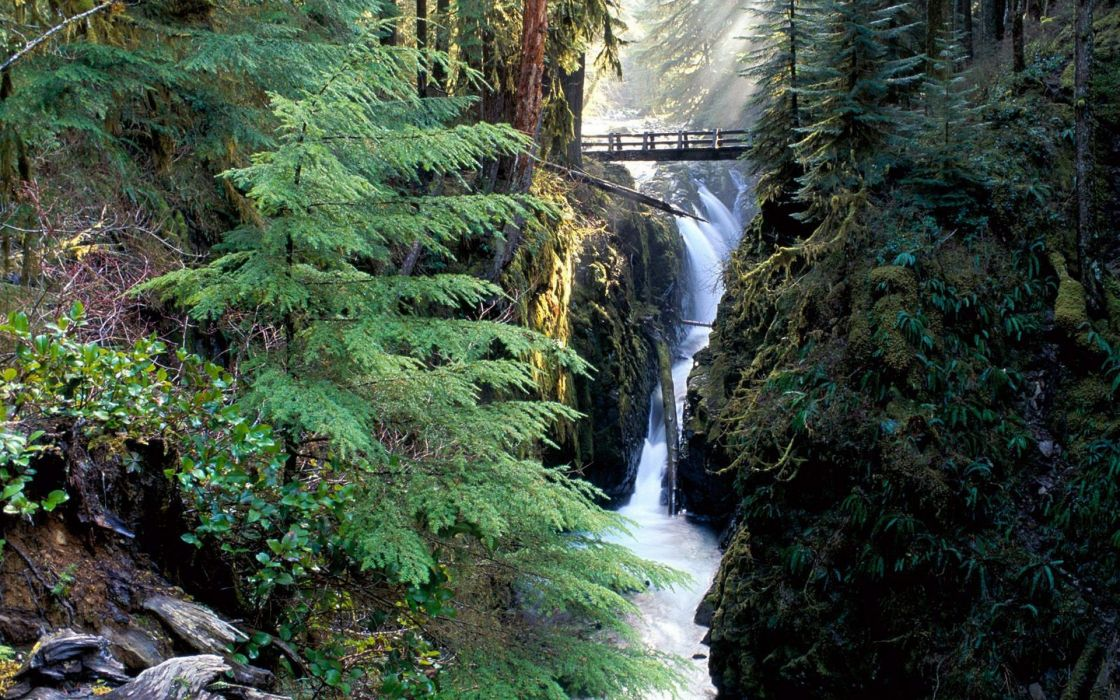 nature forests waterfalls wallpaper