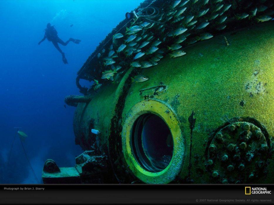 animals National Geographic underwater fishes wallpaper