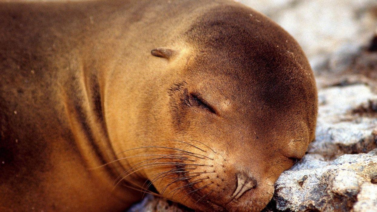 nature animals sleeping wallpaper