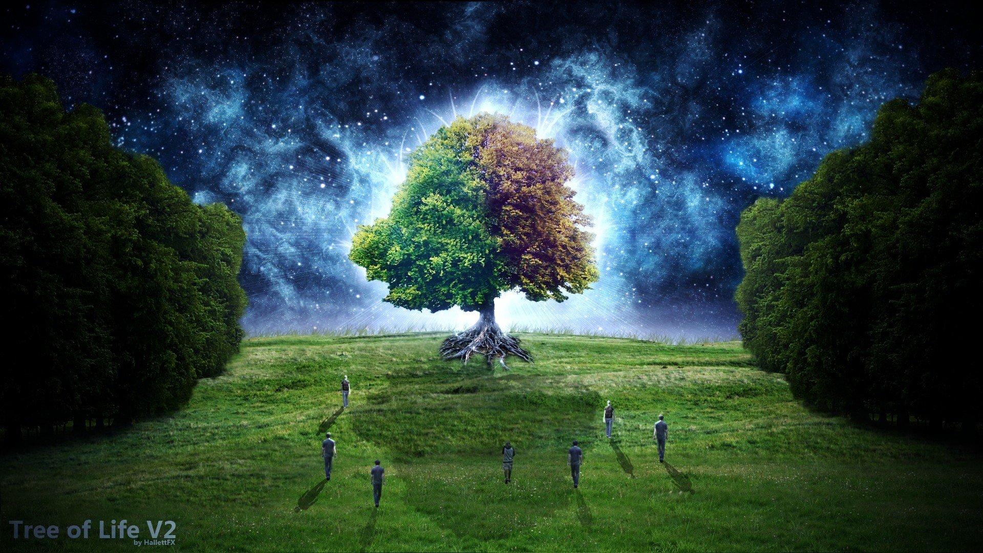 Fantasy Trees Wallpaper Wallpapers