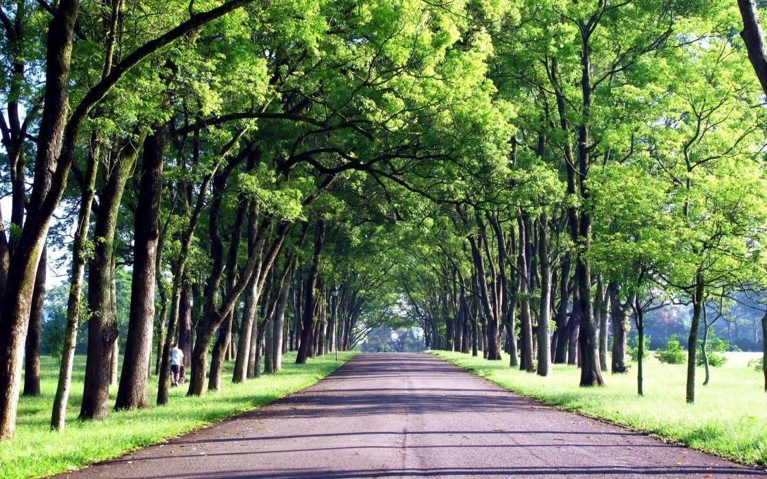 green trees roads Taiwan wallpaper