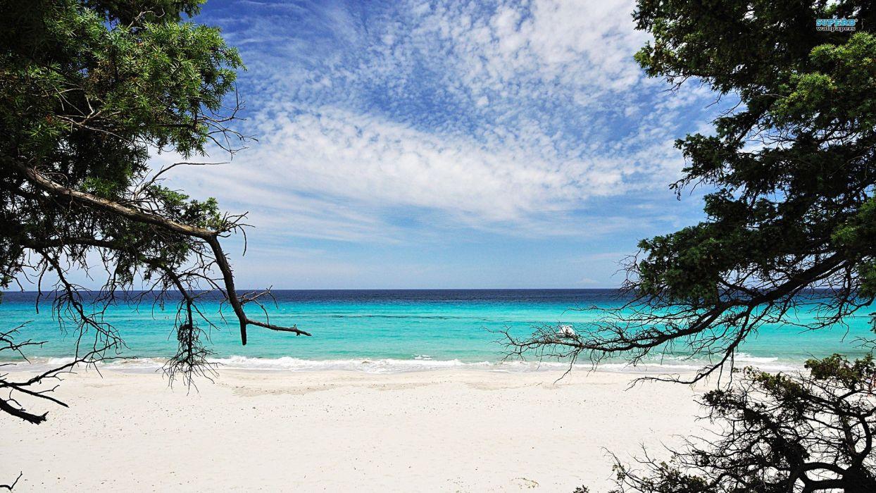 nature sand trees sea beaches wallpaper