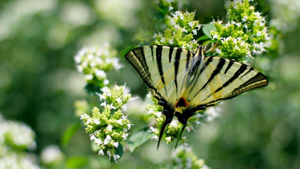 close-up butterflies wallpaper