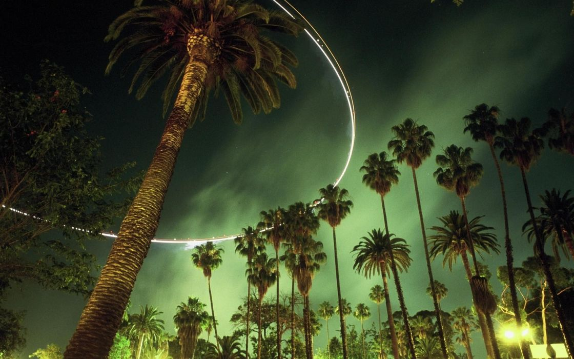 night palms wallpaper