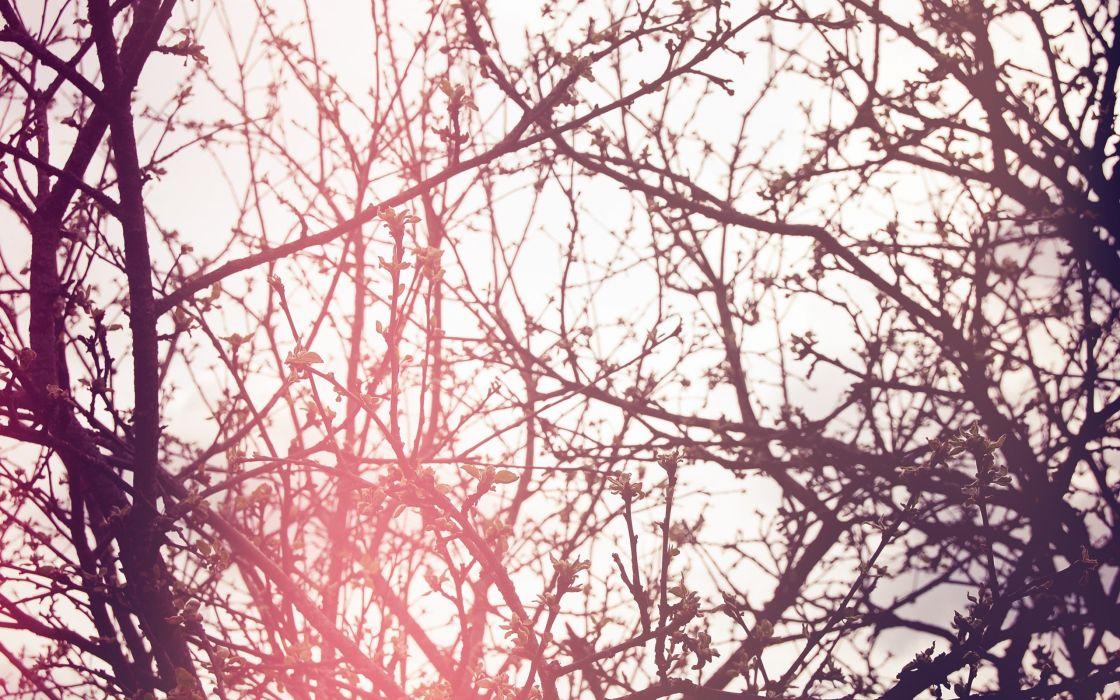 trees sunlight Flora branches wallpaper