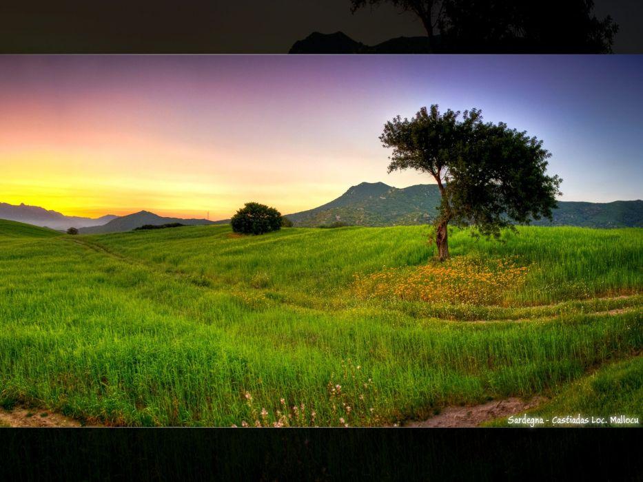 sunrise landscapes trees wallpaper