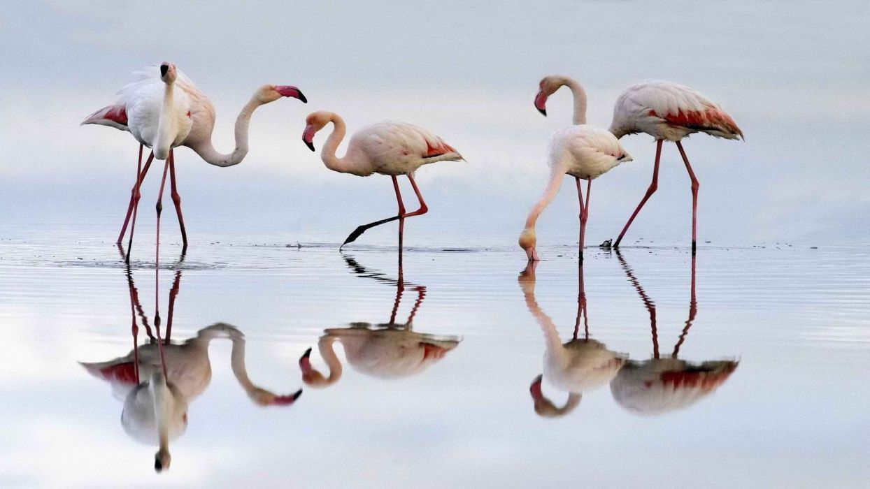 Spain flamingos lagoon wallpaper