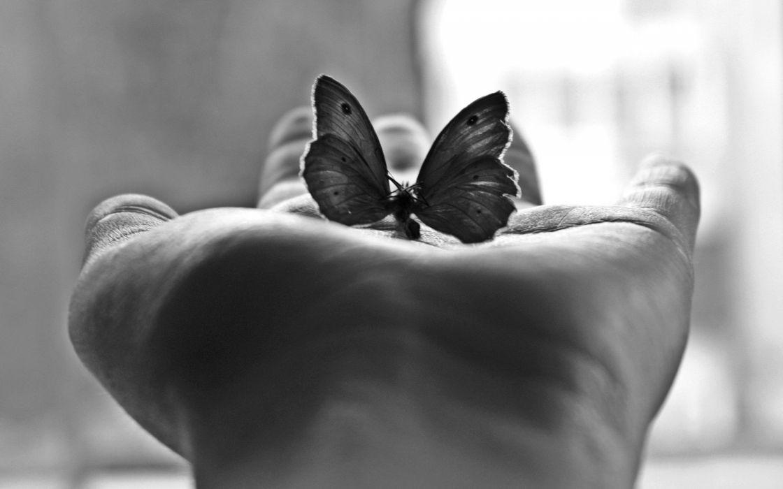 monochrome butterflies wallpaper