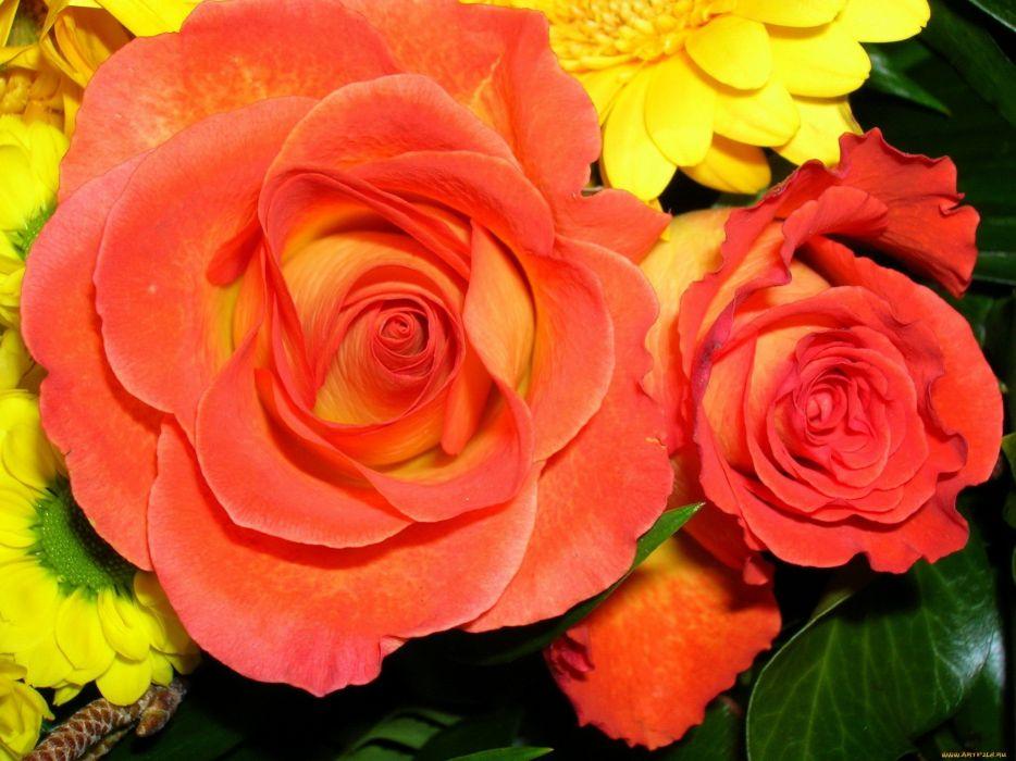 nature red flowers yellow orange roses wallpaper