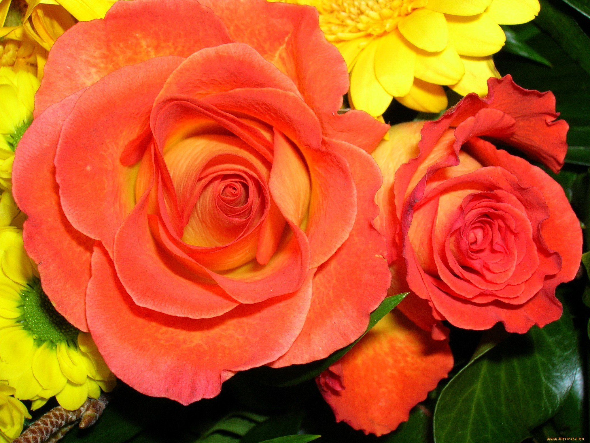 Nature Red Flowers Yellow Orange Roses Wallpaper 2048x1536 236246 Wallpaperup
