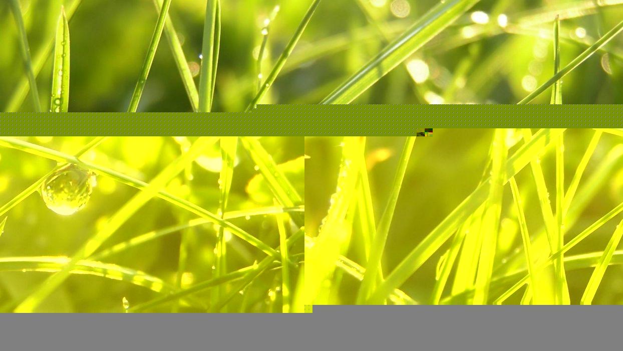 nature grass water drops wallpaper
