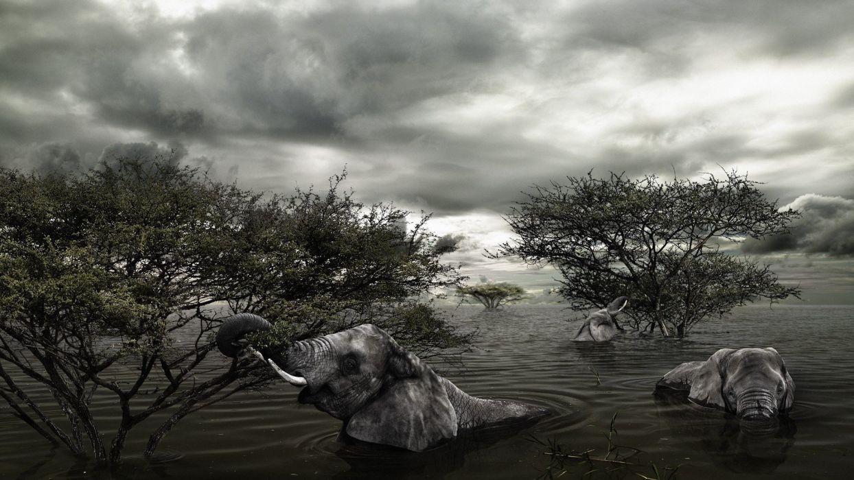 trees animals flood elephants wallpaper
