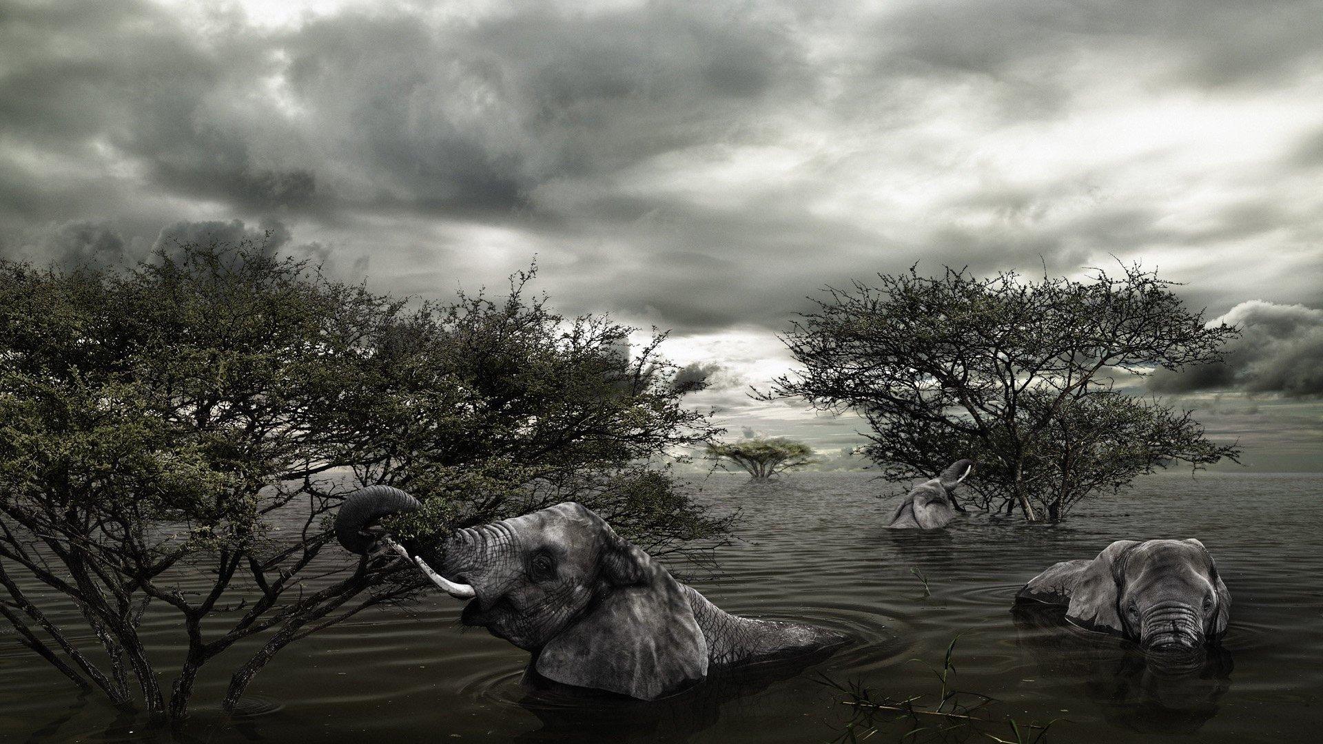 trees animals flood elephants wallpaper 1920x1080