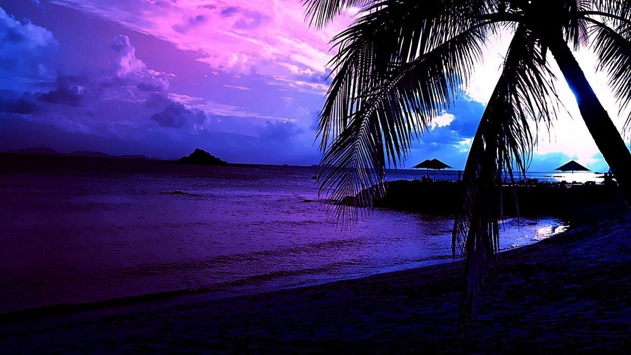 landscapes palms beaches wallpaper